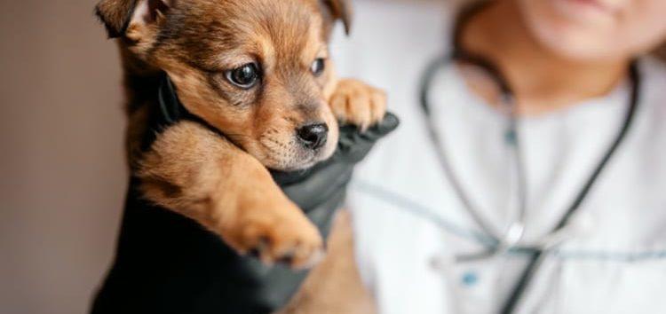Rodrigo Donati: Emergências veterinárias com animais pequenos