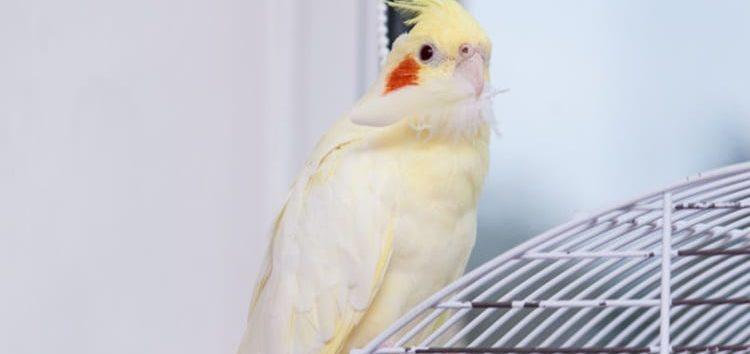 Rodrigo Donati: Cuidados necessários pra quem tem aves domésticas