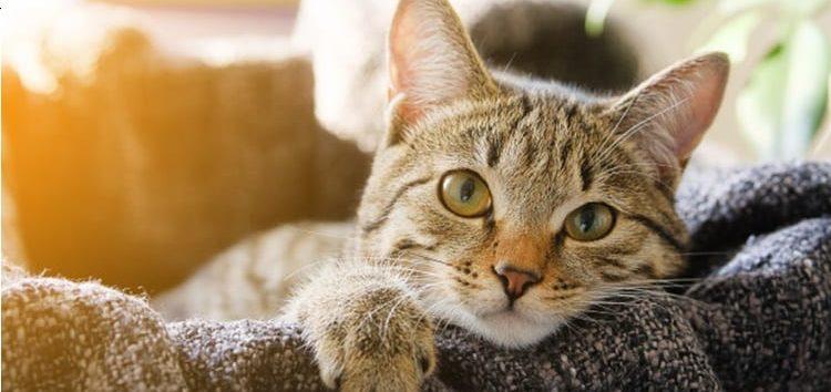 Rodrigo Donati: As diferenças entre a visão humana e a dos felinos
