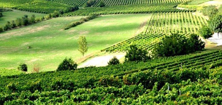 Iramaia Loiola: O vinho verde é verde?