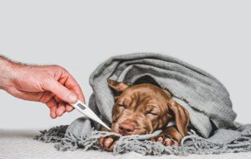Rodrigo Donati: Gripe canina