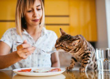 Rodrigo Donati: Cozinhando na quarentena petiscos para os pets