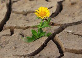 Sueli Oliveira:  O que é resiliência? O que é ser resiliente?